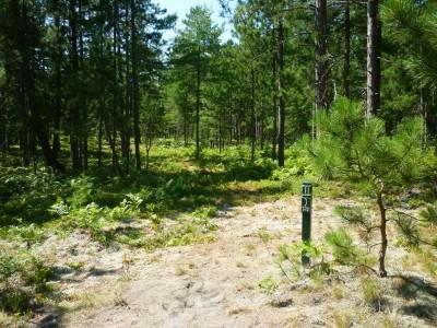Superior Pines, Main course, Hole 11 Tee pad