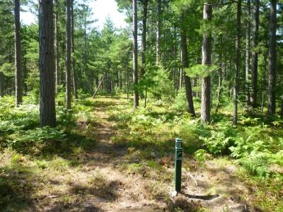 Superior Pines, Main course, Hole 13 Tee pad