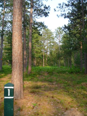 Superior Pines, Main course, Hole 1 Tee pad