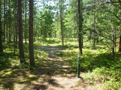 Superior Pines, Main course, Hole 14 Tee pad