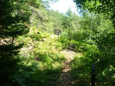 Superior Pines, Main course, Hole 17 Tee pad