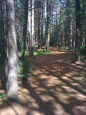 Brandy Lake Park, Main course, Hole 12 Tee pad