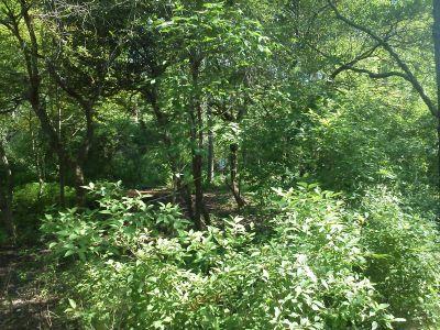 Pine Drive, Main course, Hole 16 Midrange approach