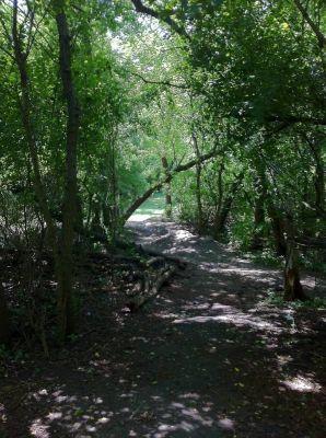 Wheeler Park, The Links, Hole 6 Tee pad