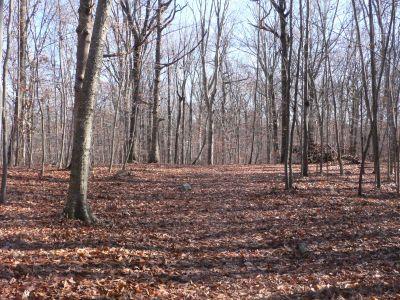 Veterans Memorial Park, Main course, Hole 4 Long approach