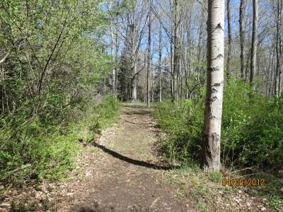 Scottville DGC, Main course, Hole 13