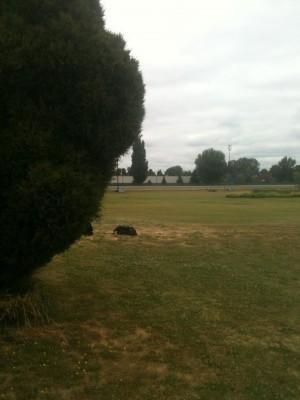 Portland Meadows, Main course, Hole 3 Tee pad