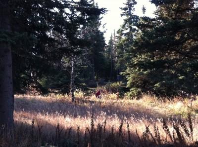 Bernie Huss Memorial Trails, Main course, Hole 6 Tee pad