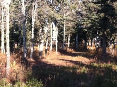 Bernie Huss Memorial Trails, Main course, Hole 2 Long approach