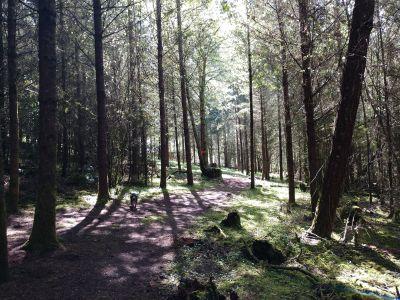 Dave Heider's Hike, Main course, Hole 6 Tee pad