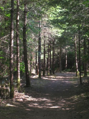 Dave Heider's Hike, Main course, Hole 10 Tee pad