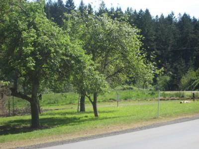 Dave Heider's Hike, Main course, Hole 1 Midrange approach