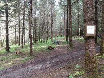 Dave Heider's Hike, Main course, Hole 13 Tee pad