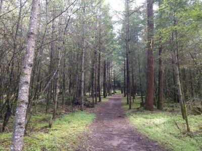 Dave Heider's Hike, Main course, Hole 5 Tee pad