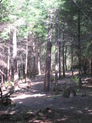 Dave Heider's Hike, Main course, Hole 14 Tee pad