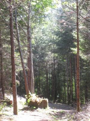 Dave Heider's Hike, Main course, Hole 11 Tee pad