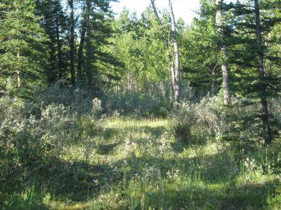 Redwood Meadows DGC, Main course, Hole 6 Tee pad