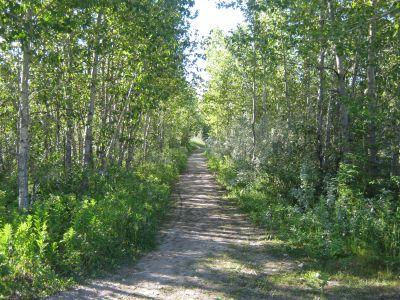 Redwood Meadows DGC, Main course, Hole 8 Tee pad