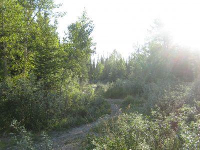 Redwood Meadows DGC, Main course, Hole 1 Tee pad