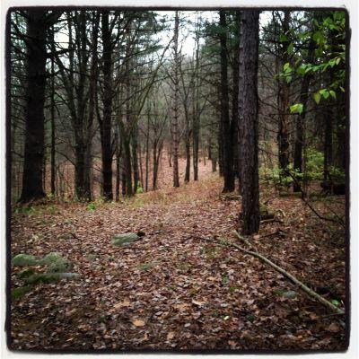 Bertha Brock County Park, Main course, Hole 10 Tee pad
