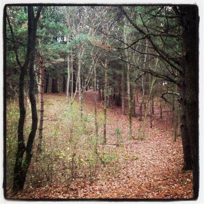 Bertha Brock County Park, Main course, Hole 5 Tee pad
