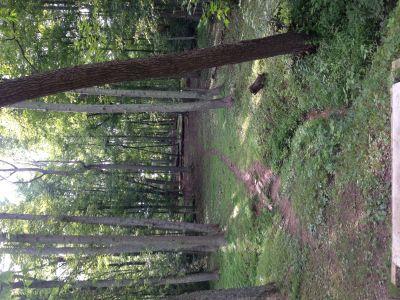 Wood County Veterans Memorial Park, Main course, Hole 8 Tee pad