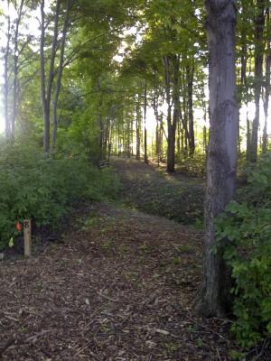 Ira Township Park, Ira Township DGC, Hole 8 Long tee pad
