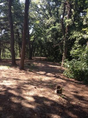 Hillcrest Park, Main course, Hole 3 Tee pad