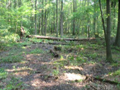 Panthorn Park, Main course, Hole 5 Long approach