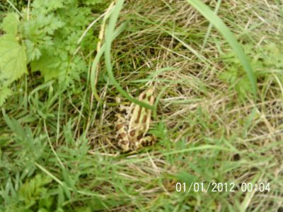 Ile Charron, Parcours Ile Charron (PIC), Hole 7