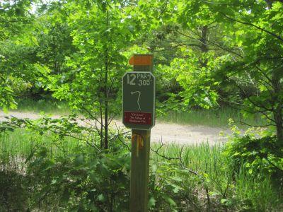 Turbine Pines, Main course, Hole 12 Tee pad