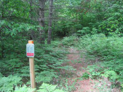 Turbine Pines, Main course, Hole 17 Tee pad