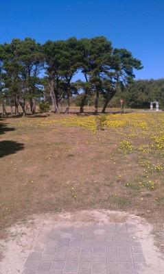 Bandon City Park, Main course, Hole 1 Tee pad