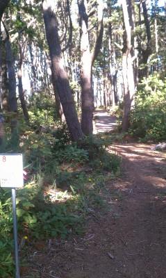 Bandon City Park, Main course, Hole 8 Tee pad