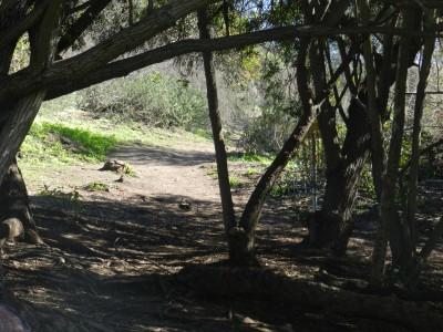 Brengle Terrace Park, Main course, Hole 6 Short approach