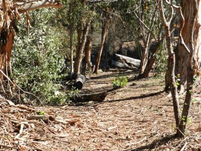 Brengle Terrace Park, Main course, Hole 15 Midrange approach