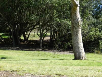 Brengle Terrace Park, Main course, Hole 6 Long approach