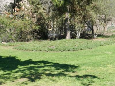 Brengle Terrace Park, Main course, Hole 16 Short approach