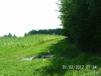 Ettyville DGC, Main course, Hole 3 Reverse (back up the fairway)