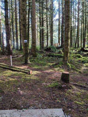 Wilder DGC, Main course, Hole 8 Tee pad