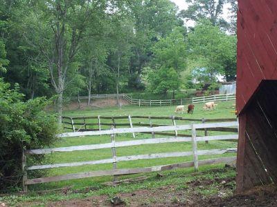 Simple Pleasures Farm, Simple Pleasures DGC, Hole 6 Tee pad