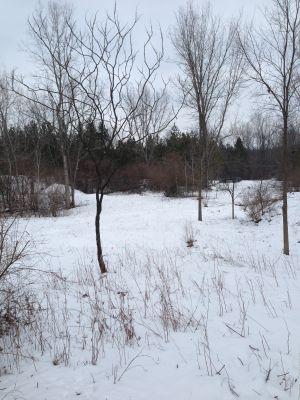 Deerfield Park, Wildwood, Hole 17 Midrange approach