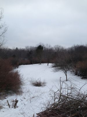 Deerfield Park, Wildwood, Hole 11 Long tee pad