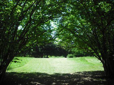 Alton Baker Park, Main course, Hole 11 Tee pad