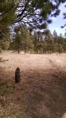 Sakuna Pines, Main course, Hole 10
