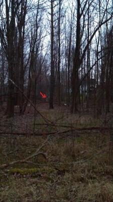 Warfield's Woods, Main course, Hole 6 Tee pad
