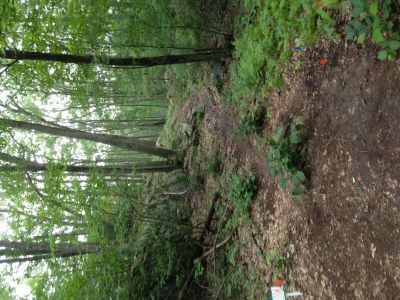 Dacey Fields, Main Course, Hole 15 Tee pad