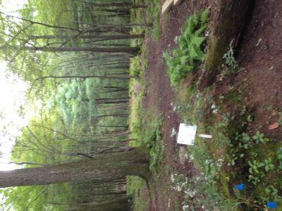 Dacey Fields, Main Course, Hole 5 Tee pad
