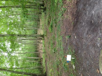 Dacey Fields, Main Course, Hole 9 Tee pad