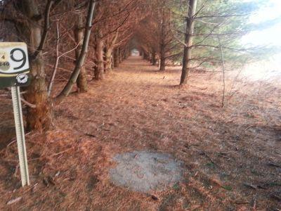 Osborn Park, Main course, Hole 9 Tee pad